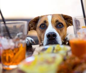 Dog Friendly Pubs in Cheshire