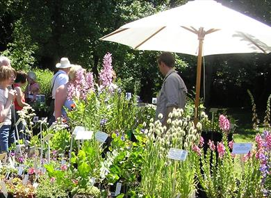 Summer Plant Hunters' Fair at Capesthorne Hall & Garden
