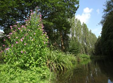 Take a circular walk of The Lovell Quinta Arboretum