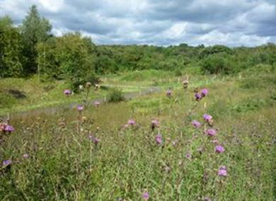 Jacksons' Brickworks Nature Reserve