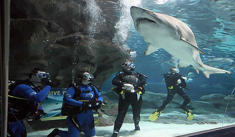 Shark dives at blue planet aquarium ellesmere port for Dive planet