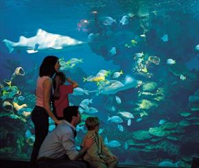 Blue Planet Aquarium - £2 off for up to 6 people