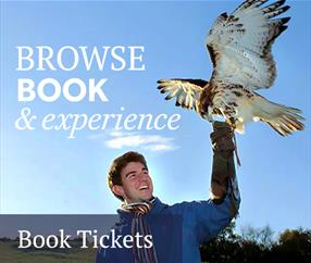 Thumbnail for Book Tickets