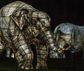 The Lanterns at Chester Zoo |