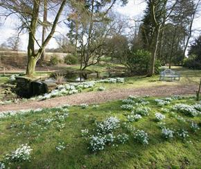 Favourite Snowdrop Locations in #perfectcheshire