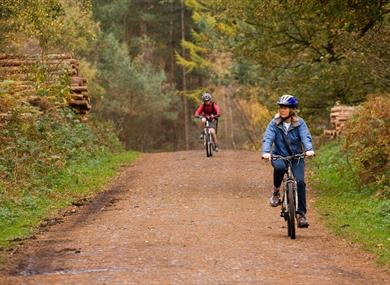 Cycling in Delamere Forest