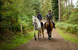 Delamere Forest Bridleways