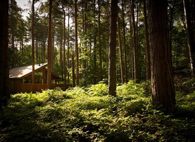 Hot tub cabins at Forest Holidays Delamere Forest