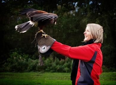 Enjoy a Meet the Birds experience at Cheshire Falconry