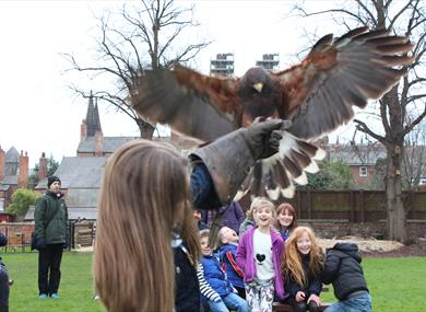Meet the birds at Chester Falconry & Nature Gardens