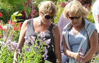 Summer Plant Hunters' Fair at Cholmondeley Castle Gardens