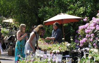 Easter Plant Hunters' Fair at The Dorothy Clive Garden
