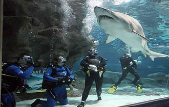 Shark Dives at Blue Planet Aquarium