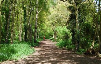 Walks for all - Stanney Woods Local Nature Reserve